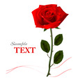 background with beauty red rose vector image vector image