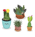 cactus all vector image vector image