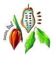 cocoa pod vector image vector image