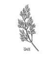 dill ink sketch vector image vector image