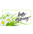 spring background with daisies and fresh green vector image vector image