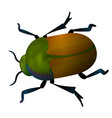 beetle icon isolated on white background vector image