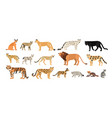 collection of different wild and domestic cats vector image vector image