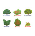different garden berry shrubs and fruit trees vector image vector image