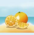 orange fruit fresh harvest - beach background vector image