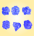 Set of blue roses symbol of love vector image