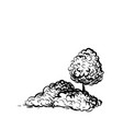 tree and shrubs on white background hand drawn vector image