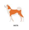 akita inu cute purebred japanese companion dog vector image vector image