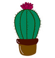 cactus with flower on white background vector image vector image