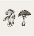 collection of highly detailed hand drawn mushrooms vector image