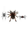 poisonous spiders species cartoon set vector image