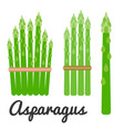 set of vegetable asparagus icon set vector image vector image