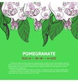 Pomegranate for postcard invitation vector image vector image