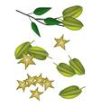 A Set of Delicious Fresh Green Carambolas vector image vector image