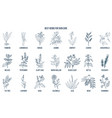 collection of best herbs for skin care vector image vector image