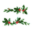 decor nature holly vector image vector image