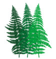 green fern background vector image