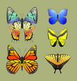 colorful butterflies with abstract decorative vector image vector image