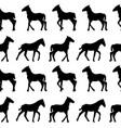 seamless background with foals silhouettes vector image