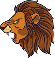angry lion head mascot vector image vector image