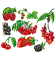 colored berries on white background vector image vector image