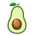 half avocado vector image vector image