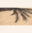 shadow from palm tree and sun umbrella on sand vector image vector image