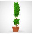 Green foliage houseplant alphabet Exclamation mark vector image vector image