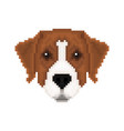 portrait of a australian pinscher in pixel art vector image vector image
