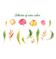 floral set colorful floral collection with vector image vector image