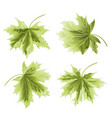 four colored leaves maple the green background vector image