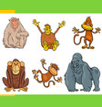 monkeys animal characters cartoon set vector image