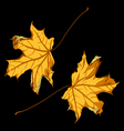 pair of falling down maple leafs on black backgrou vector image vector image
