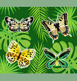 tropical butterflies and exotic leaves foliage vector image