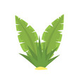 fern green tropical leaves cartoon vector image vector image