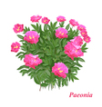Gorgeous peony vector image vector image