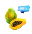 Papaya hand drawn watercolor on a white vector image vector image