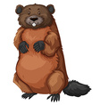Beaver with brown fur vector image vector image