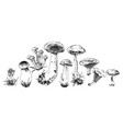 Hand drawn forest mushrooms