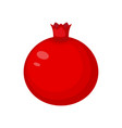 pomegranate fruit isolated o vector image
