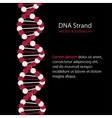 DNA Strand genetic code vector image