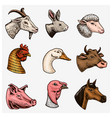 farm animals head a domestic horse pig goat vector image vector image