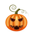 pumpkin holiday halloween halloween attribute vector image