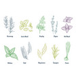 set colored hand drawn herbs and spices vector image