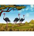 Three ostriches running in the field vector image