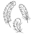 Bird Feathers Set vector image vector image