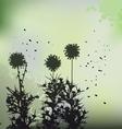 floral background - dandelion vector image vector image