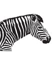 image of an zebra head vector image vector image