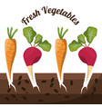 fresh vegetables growth harvest image vector image