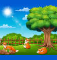 three foxs cartoon on nature scene vector image vector image